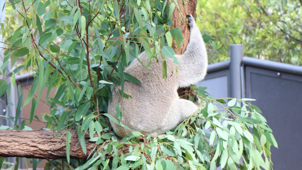 taronga zoo activities